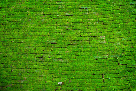 Brick wall with moss growing texture of old stone wall covered green moss