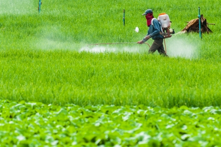 pesticides: Farmers use pesticides in rice fields Mae Chaem, thailand Stock Photo