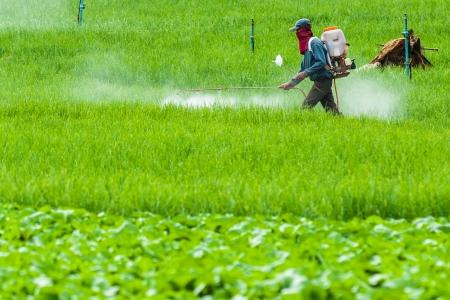 Farmers use pesticides in rice fields Mae Chaem, thailand Reklamní fotografie