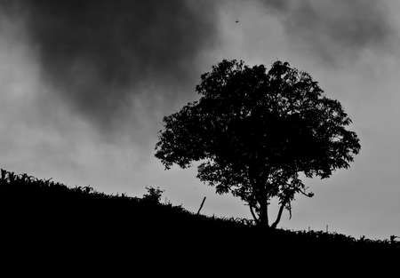 slope: A mature old  tree spreads its branches out on a country slope Stock Photo