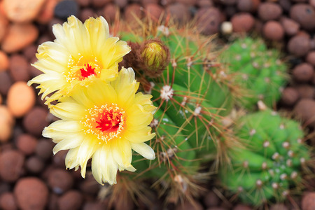 marco: colorful cactus, close up image of rows of cute colorful miniature cactus