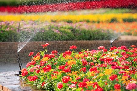 garden hose: sprinkler head watering the flower