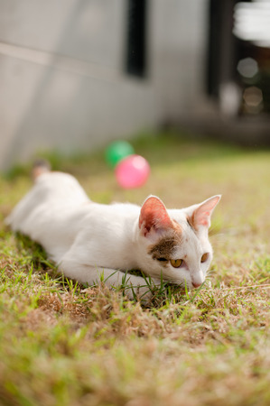 relaxing sitting cat white, cute funny