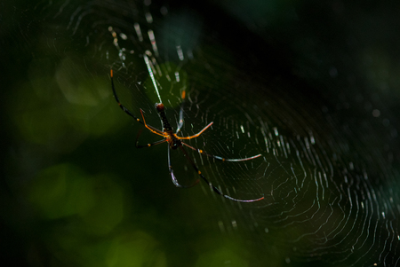 Spider arachnid sits in its lair on black background Stock Photo