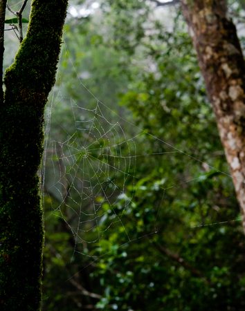 rain forest animal: Morning dew. Shining water drops on spiderweb over green forest background. Macro. Bokeh