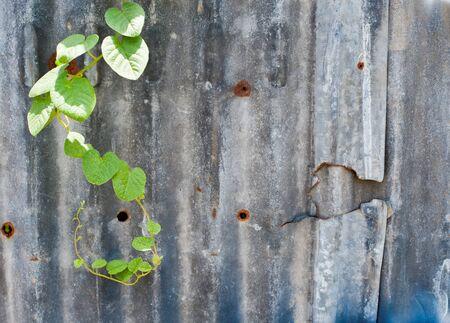 zinc: Rusty corrugated metal wall ,rusty Zinc grunge style background