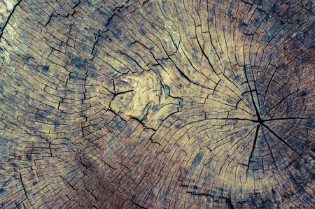 Wood texture background natural Stock Photo
