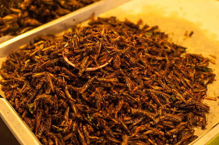 Crispy fried insects  are regional delicacies in many Asian countries like Thailand. Stock Photo