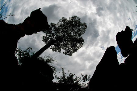 atmospheric: Cup shaped stone. The Pa Hin Ngam National Park in Chaiyaphum, Thailand