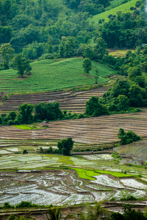 Terrace rice fields in Mae Chaem District Chiang Mai, Thailand Stock Photo