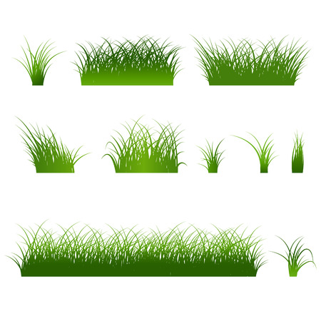 Fragment of a beautiful green grass  isolated on a white, Vector illustration