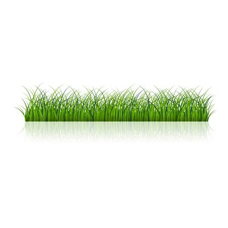 Fragment d'une belle herbe verte isolée sur fond blanc, illustration vectorielle
