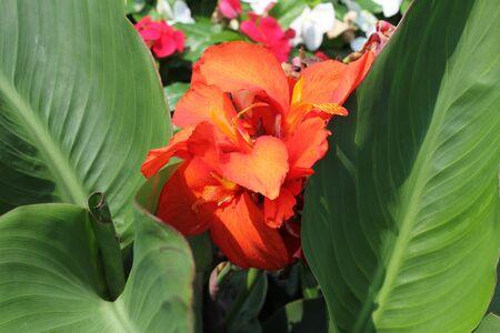 Orange flower between green palm leaves  Фото со стока