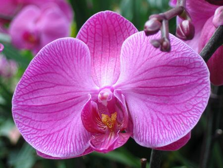 Close up of purple orchid photo
