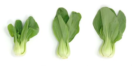 Bok choy in isolated white