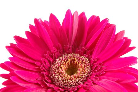 Close up of pink gerber daisy in isolated white Stock Photo - 592352