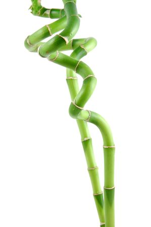 Lucky bamboo stems in isolated white background Stock Photo