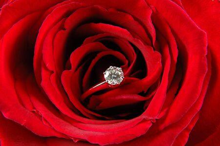 Gros plan de la bague de fian�ailles en rose rouge