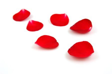 P�tales roses de rouge dans le blanc disolement