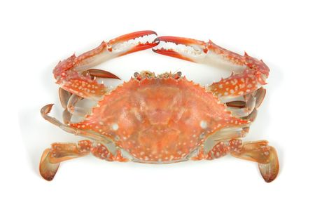 crab meat: Boiled crab in isolated white background Stock Photo