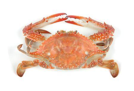 cangrejo: Cangrejo cocido en fondo blanco aisladas