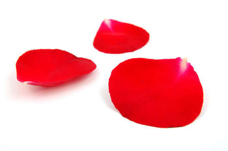 Red rose petals in isolated white