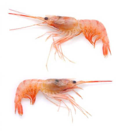 shrimp: Two raw prawns isolated in white background