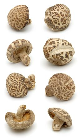 Shiitake mushrooms in isolated white background