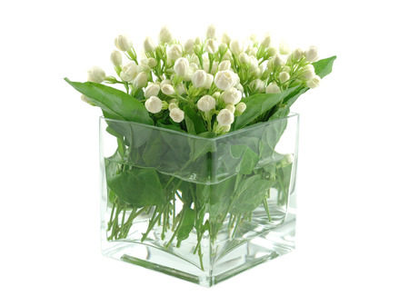 Bouquet of jasmines in vase, isolated white background Stock Photo