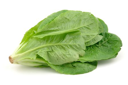 romaine: Close up of a romaine lettuce in isolated white background