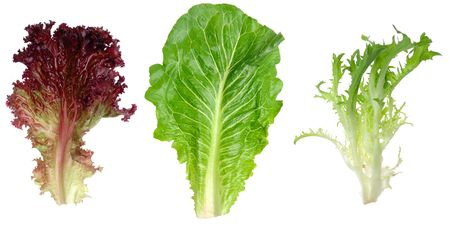 endive: Red leaf lettuce, romaine and endive leaf isolated on white