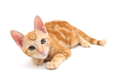 Orange tabby kitten isolated on white background photo