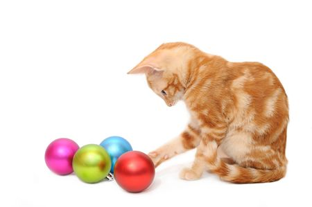 Kitten playing christmas balls in isolated white background photo