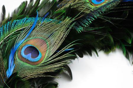 pluma de pavo real: Cerca de los ojos m�s de plumas de pavo real blanco Foto de archivo