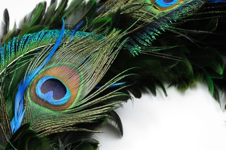 peacock eye: Close up of peacock feather eye over white