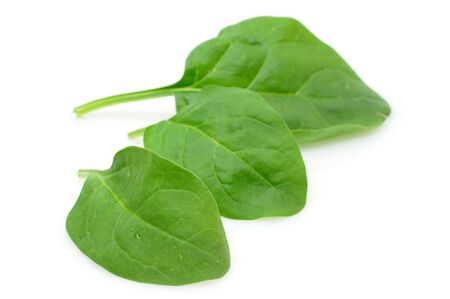 Three baby spinach leaves in isolated white background photo