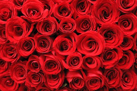 Historique de la belle rose rouge Banque d'images - 4745098