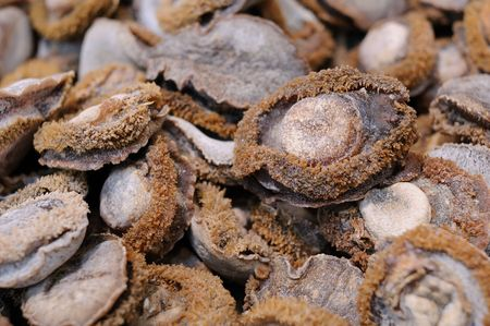 Close up of dried abalone Stock Photo