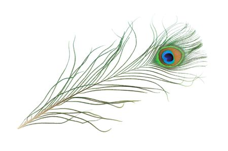 peacock eye: Peacock feather in isolated white background Stock Photo