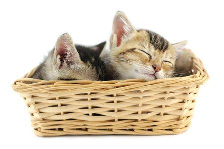 Lovely kittens sleeping in wicker basket, isolated on white photo