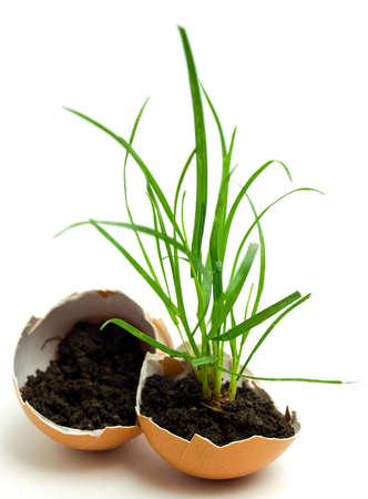plant in egg Stock Photo - 4781087
