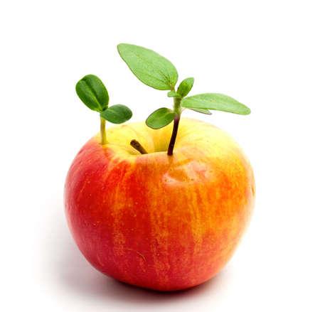 Planta de manzana Foto de archivo - 4781077