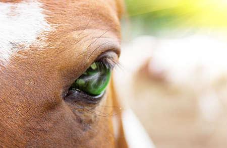 primo piano di un cavallo degli occhi Archivio Fotografico - 5138764