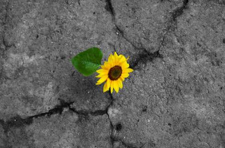 Sunflower on monochrome background Stock Photo - 5169079