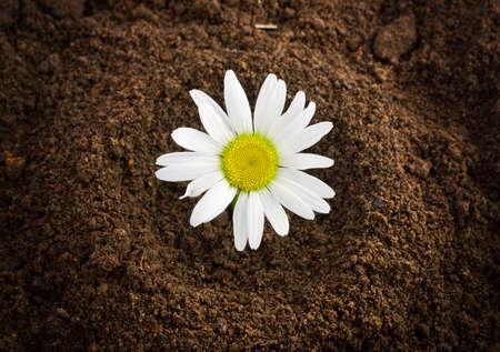 daisywheel: new born daisywheel