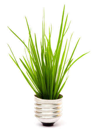 lightbulb with plant growing inside Stock Photo