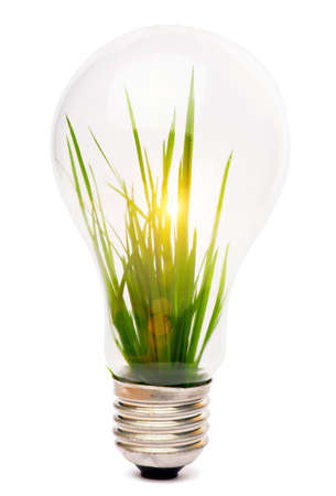 sustainability: lightbulb with plant growing inside