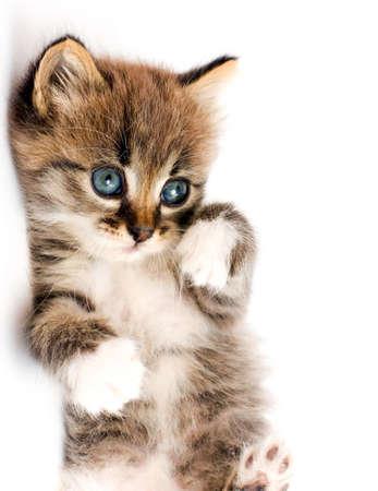 beautiful kitty Stock Photo - 6748073