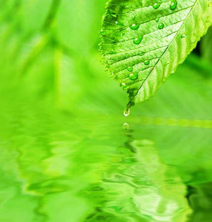 ondulation: Feuille humide