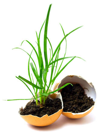 plant in egg Stock Photo - 7050719